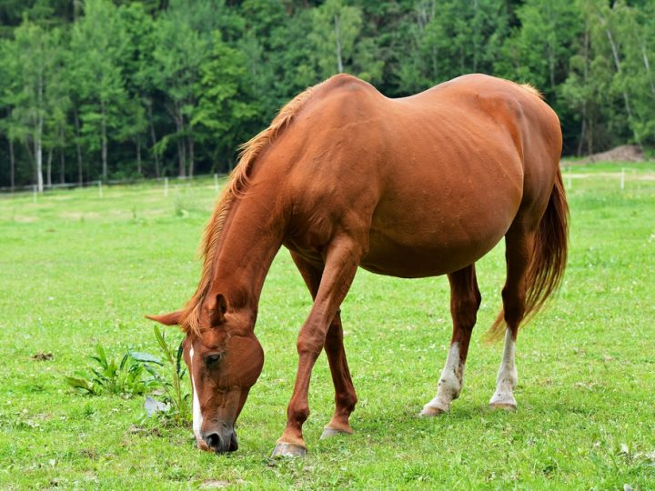 RVC research pinpoints reason for failed equine pregnancies