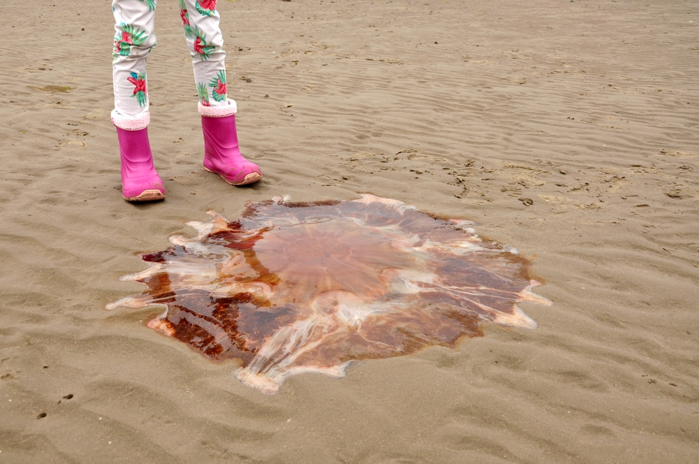 Dog owners warned over jellyfish