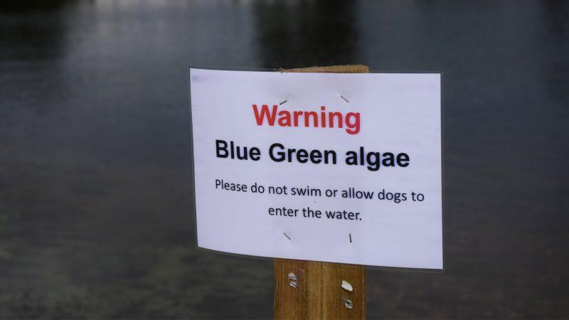Warm weather drives blue green algae threat