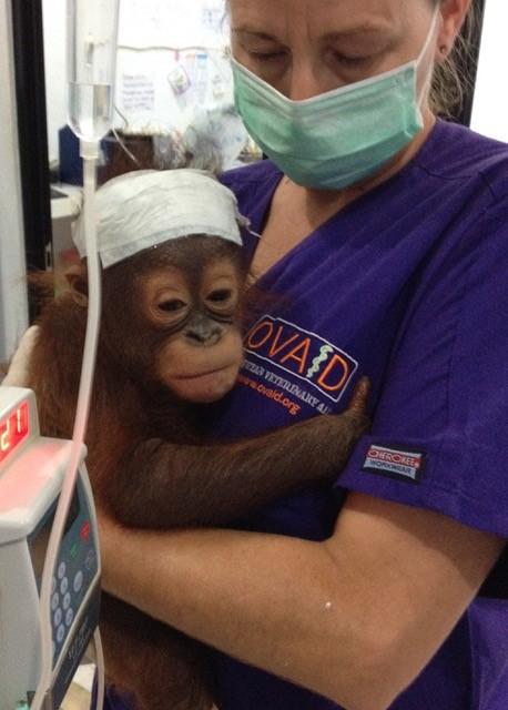 Virbac behind Orangutan conservation efforts