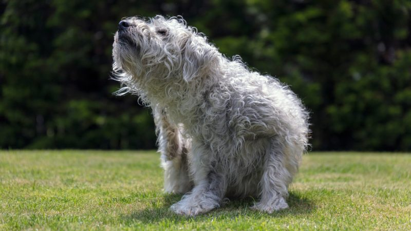 'Pet welfare crisis' prediction from PDSA