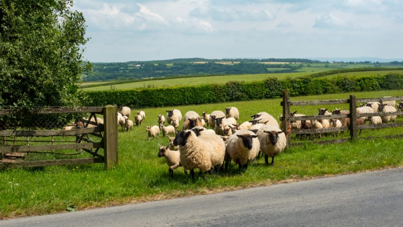 Veterinary input was vital to new Agriculture Bill, says BVA