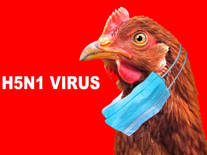 Another Bird flu outbreak confirmed – this time in Derbyshire