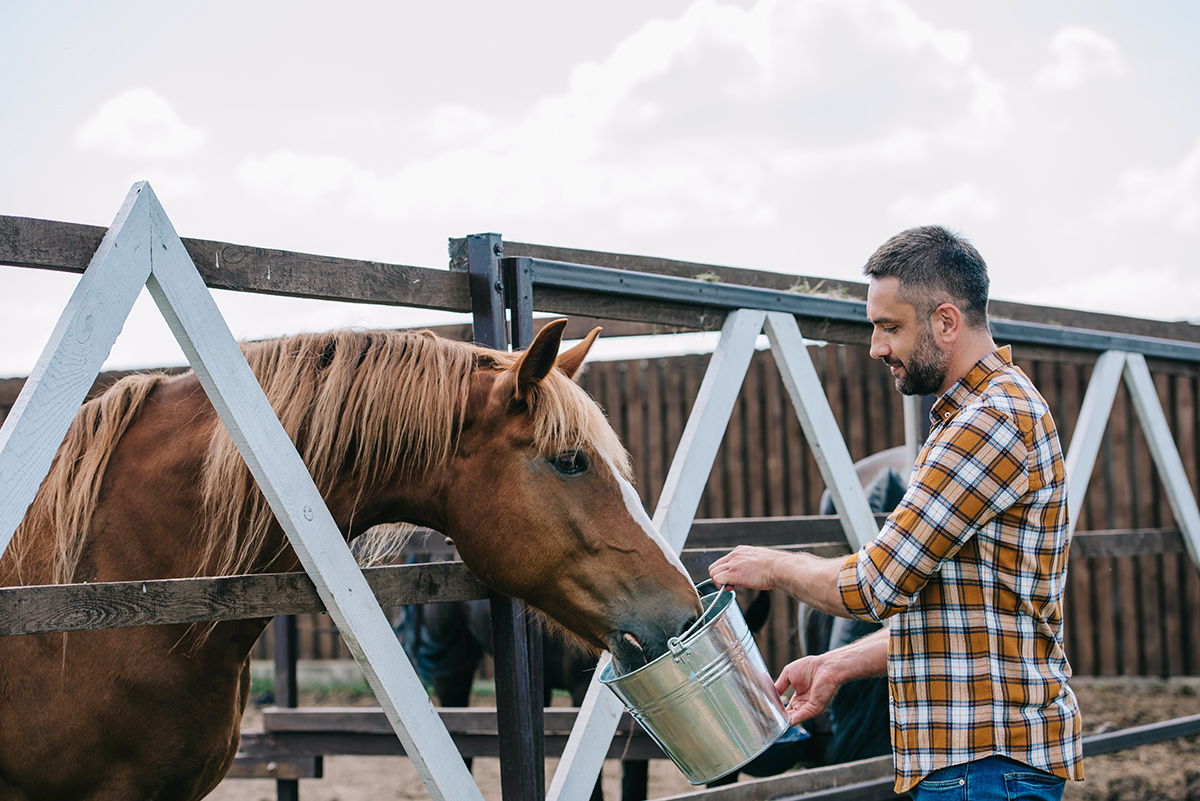 BEVA keen to stirrup interest in equine nutrition course