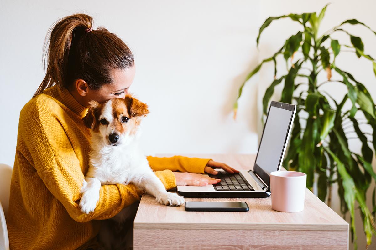 NOAH backs pet ownership in rented homes