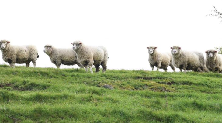 Vets flag lameness as key concern with sheep and cattle