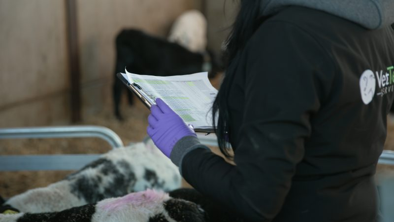New national qualification for farm animal health professionals