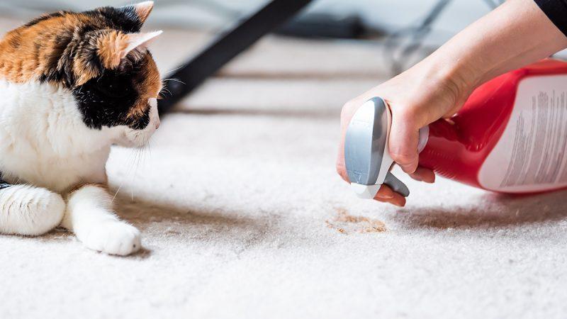 Vet nurse's warning on cleaning danger to pets