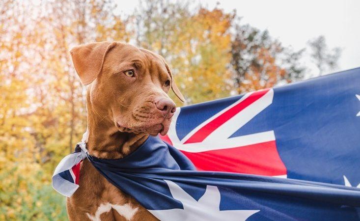 UK and Irish vets to get  Australia travel exemptions