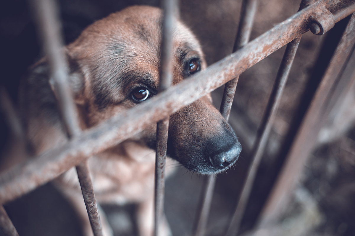 England's animal cruelty sentencing laws now as tough as Northern Ireland's