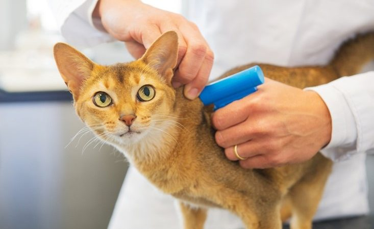 Call for NI to follow England's lead on cat chipping