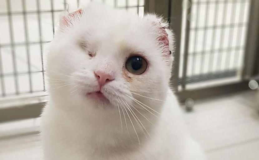 Vet amputates Belfast cat's ears due to sun damage