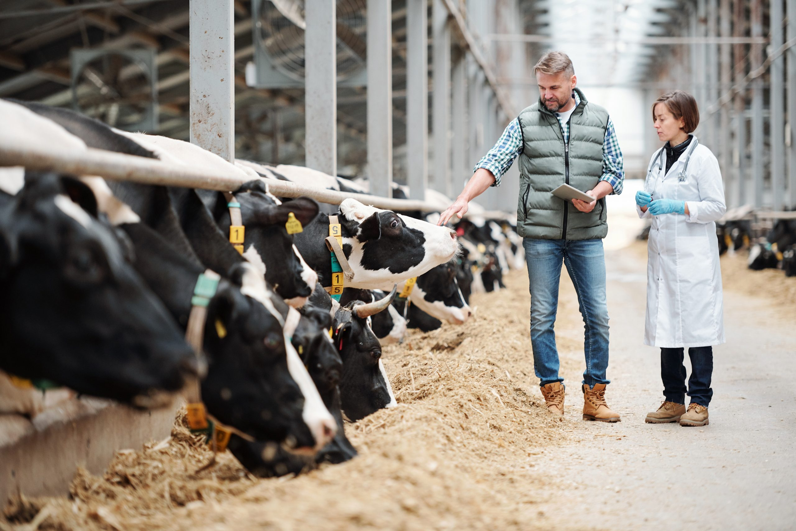Nominations open for 2022 Young Dairy Vet of the Year
