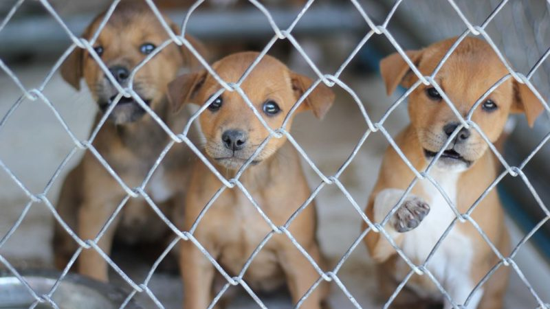 Anger over NI's multi-million pound trade in sick and dying pups
