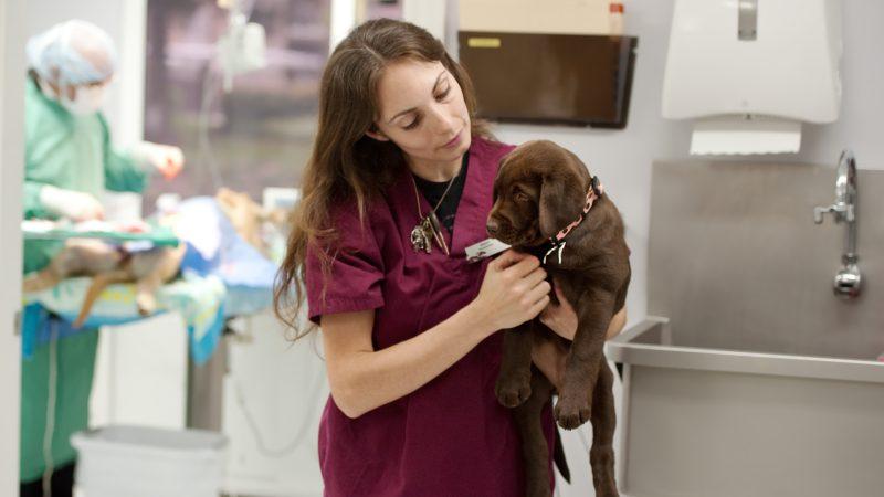 Veterinary nurses key part of SAMsoc online event